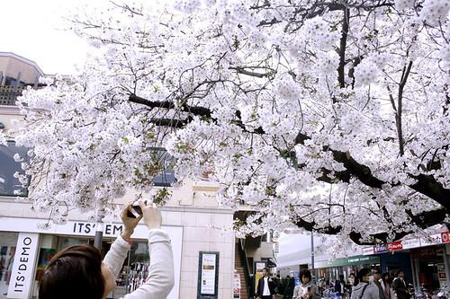2011/4/10 駅前の桜