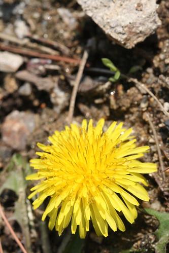 Namsan in Spring