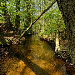 The clean swallow stream of Leuvenum (Bn) Tags: trees shadow water netherlands beauty sunshine birds animals creek walking geotagged woodlands stream solitude beek hiking wildlife clarity clean route sing biking brook shallow grassland tranquil harderwijk reddeer veluwe natue wandeling boggy natuurmonumenten gelderland wildboar ermelo schoon cleanest staverden leuvenum reen dassen leuvenumsebos hierdensebeek edelherten wildezwijnen schoonste leuvenumsebeek staverdensebeek leuvenumforest geo:lon=5714441 geo:lat=52307031 hulsthorst poolseweg kristalhelderwater