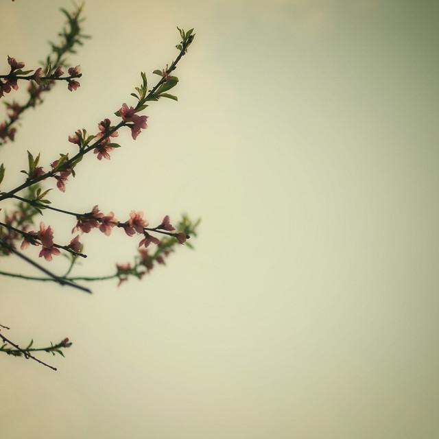 vintage spring
