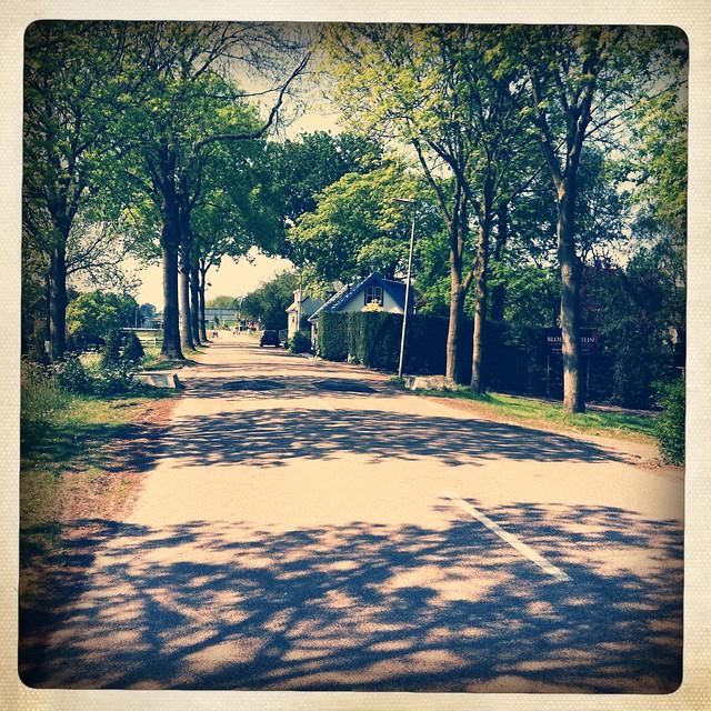 sunny spring lane