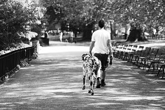 One Man And His Dog (Susie Potter) Tags: park people blackandwhite dog man tree london fence chairs greatdane battersea