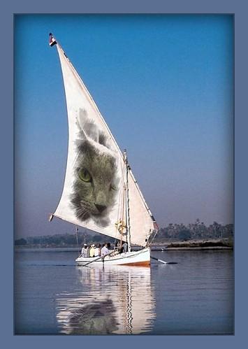 Megumi's new sailing plan...