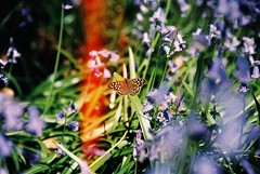 (Maddie Joyce) Tags: flowers trees friends light summer plants bus green film beautiful bluebells forest 35mm canon butterfly fun eos maddie spring woods shoes hiking walk magic hike adventure flare joyce vans bishop benji wwwthemagicbuscollectivecom