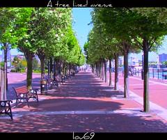 salford quays (lou,69.) Tags: road trees photoshop canon buildings bench pavement salfordquays bluesky powershot bin louise april salford davidson 2011 treelinedavenue wateredge lou69