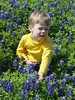 Maxwell Picking Blue Bonnets (ellishackler) Tags: max ray ellis mark jim lori nancy maxwell hack deanna dee keerti hackler ellishackler