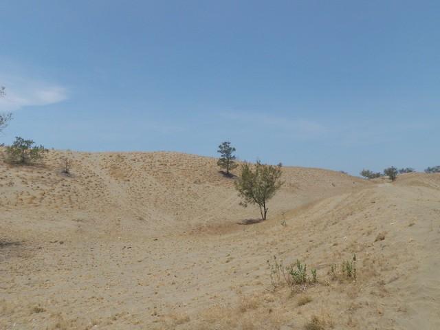 La Paz Sand Dunes (7)
