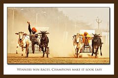 Winners Win Races, Champions make IT look EASY ! (Harvarinder Singh) Tags: canon punjab ludhiana ruralolympics miniolympics realindia kilaraipur canoneos5dmarkii ruralgames kilaraipurgames harvarindersinghphotography harvarindersingh bullockcartsracing