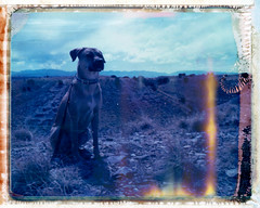 King of the Mountain (Aubry Aragon) Tags: blue light sky dog dessert polaroid hills expired rhodesian polacolor