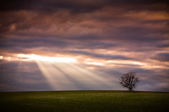 With Words As With Sunbeams (Loren Zemlicka) Tags: light sunset sky usa tree green nature field sunshine wisconsin clouds rural landscape outdoors photography evening countryside photo image dusk horizon country hill picture beam explore northamerica sunrays sunbeam lonetree lonelytree attica canoneos5d flickrexplore greencounty canonef100mmf28macrousm flickrfrontpage lorenzemlicka