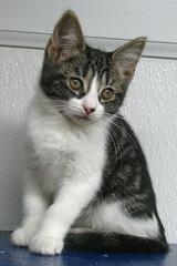 Subra (Kurt Faler) Tags: rescue cats cat kitten earth kitty kittens center angels felines clinic neuter spay ffrc friendsoffelinesrescuecenter earthangelsspayneuterclinic easnc