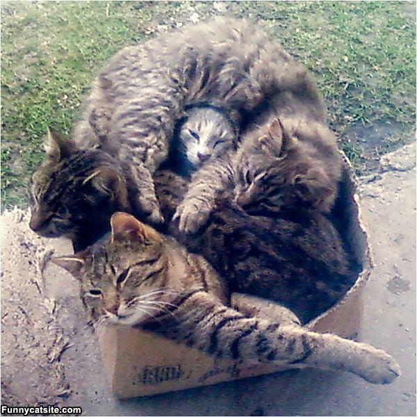 We_Love_This_Box813