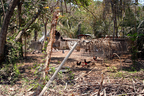 Puerto Vallarta - City and Tropical Jungle Escape Tour - Cock Fighting Pens. Nice.