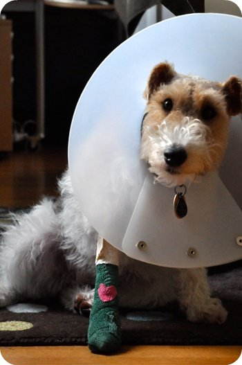 The saddest dog in the world