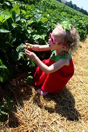 Autumn-picking-strawberry