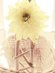 ~ (DLo3t 2boha) Tags: canon شمس ورد اصفر بني كانون زهور سله canong11 كانونجي11