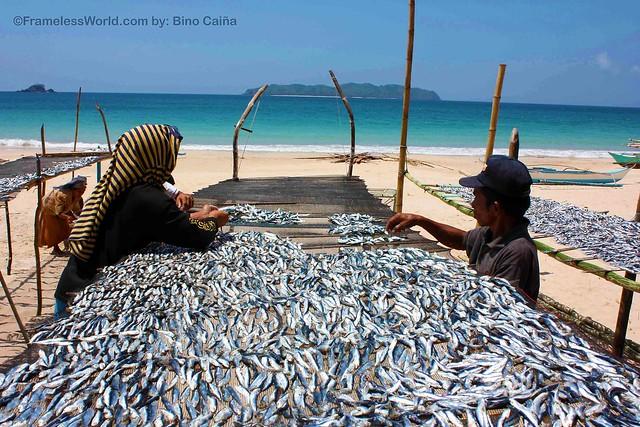 Dried Fish (Tuyo) of El Nido, Palawan