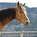 Horse Whisperer