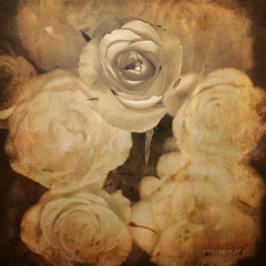 sing me a song... (ildikoneer) Tags: flower art texture nature rose canon eos petal mm 50 40d mygearandme