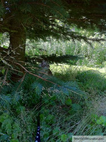 FTK July Pines