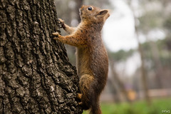 a squirrel climbing