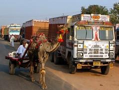 india (gerben more) Tags: road india man truck traffic tata fatehpursikri streetlife streetscene moustache camel transportation hindi goodscarrier