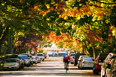Vancouver Street in Autumn (TOTORORO.RORO) Tags: panasonic zs100 bc canada greatervancouver britishcolumbia colors vancouver view light travel tourist tourism popular visitor attractions living tranquility glowing autumn colours maple leaves red yellow green trees season    art