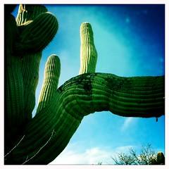Saguaro Arms by Jason Willis