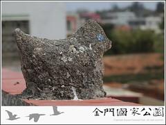 烈嶼屋脊白雞-01.jpg