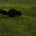 Scrat - Stanley Park
