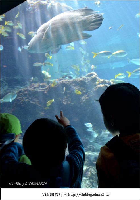 【沖繩景點】美麗海水族館~帶你欣賞美麗又浪漫的海底世界!10