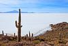 Bolivia-100529-052 (Kelly Cheng) Tags: southamerica salt bolivia getty salardeuyuni incahuasi inkawasi inkahuasi salardetunupa pickbykc