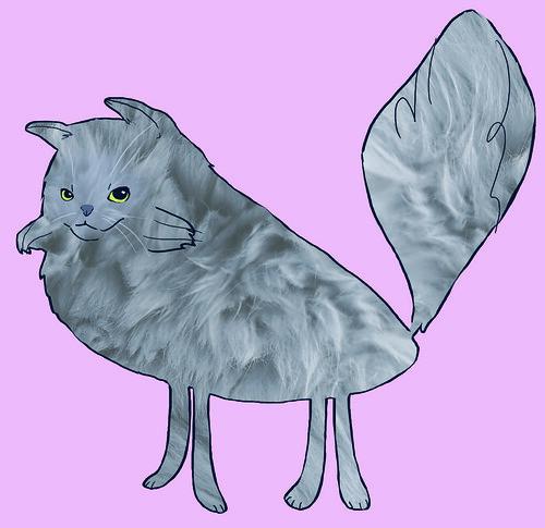 Noah the cat