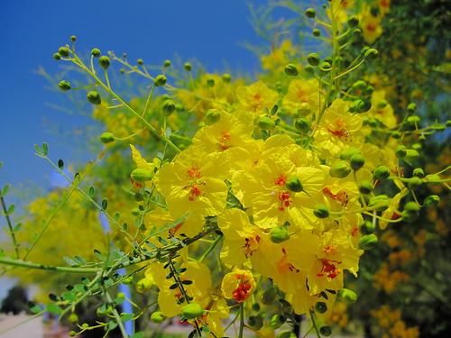 IMAGE: http://farm6.static.flickr.com/5109/5620273633_2d02a5f49c.jpg