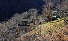 Lo scenario selvaggio delle alpi di Intra, Verbano Cusio Ossola (emilius da atlantide) Tags: alps fauna flora alpi montagna intra verbania emilius alpilepontine valleintrasca intrasca