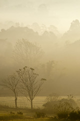 Morning Mist (Nature's Gift Photography) Tags: morning travel trees mist nature beauty rural sunrise trek dawn asia state burma hike layers myanmar shan kalaw