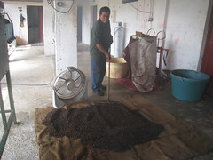 One of the coffee cooperative members processing coffee