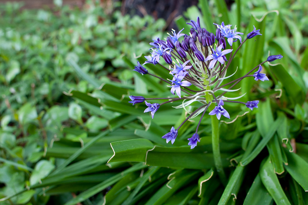 Purple Flowers #1
