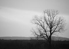 black & white sunset (ekelly80) Tags: sunset blackandwhite bw mountains tree field virginia nationalpark meadow civilwar manassas manassasbattlefield manassasbattlefieldnationalpark