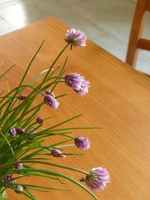 chive time