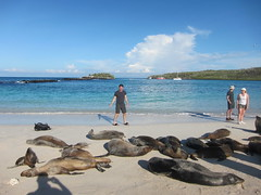 Me and Galapagos Sealions on Beach