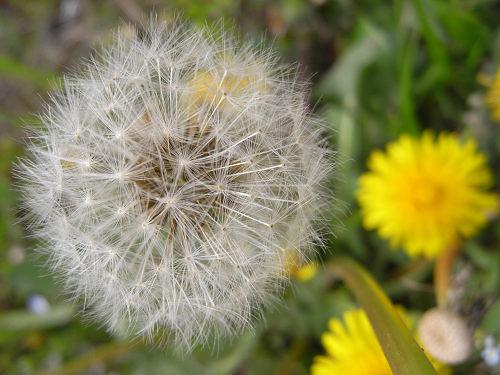 春の花々@明日香村-10