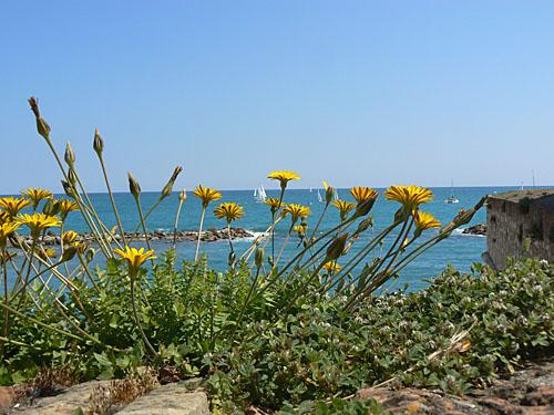 fleurs et bateaux.jpg