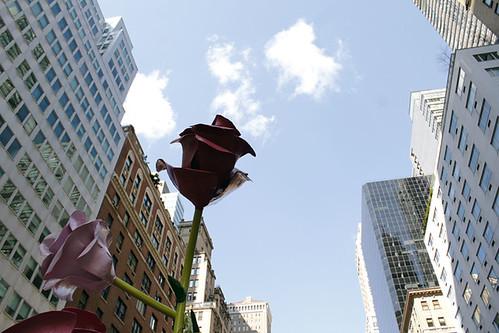 Will Ryman's 'Roses'