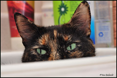 I See You (vera.1955) Tags: cat eyes feline sink nikond90