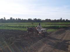 شمال السودان - ودكروم (tohami00) Tags: كروم كميرة التهامي 0122035050