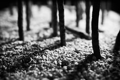 Lonesome Shadows (JonnySchaab) Tags: nightphotography blackandwhite stilllife white abstract black macro landscape artwork photoshoot fineart highcontrast photograph conceptual collegework finaldraft continuouslighting jonathonschaab jonnyschaab
