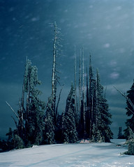 Under nightlight anywhere feels like home (Zeb Andrews) Tags: trees winter light snow cold color film night oregon forest landscape quiet nighttime mthood pacificnorthwest pentax67 bluemooncamera zebandrewsphotography