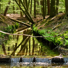 We have waterfalls in the Netherlands (Bn) Tags: trees shadow water netherlands beauty sunshine birds animals creek walking geotagged woodlands stream solitude beek hiking wildlife clarity clean route sing biking brook shallow grassland harderwijk reddeer veluwe natue wandeling boggy natuurmonumenten gelderland wildboar ermelo schoon cleanest staverden leuvenum reen dassen leuvenumsebos hierdensebeek edelherten wildezwijnen schoonste leuvenumsebeek staverdensebeek leuvenumforest geo:lon=5714441 geo:lat=52307031 hulsthorst poolseweg kristalhelderwater