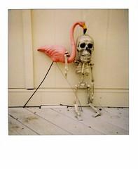 Until Death Do Us Part (ricko) Tags: deleteme film skeleton polaroid death saveme4 saveme5 saveme6 saveme savedbythedeletemegroup saveme2 saveme3 saveme7 saveme10 saveme8 saveme9 pinkflamingo